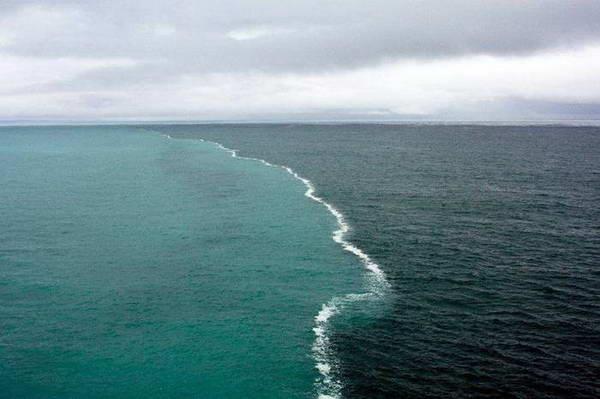 Чудеса Азовского моря