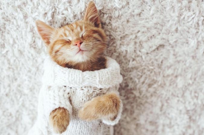 Кто фотографирует котиков?