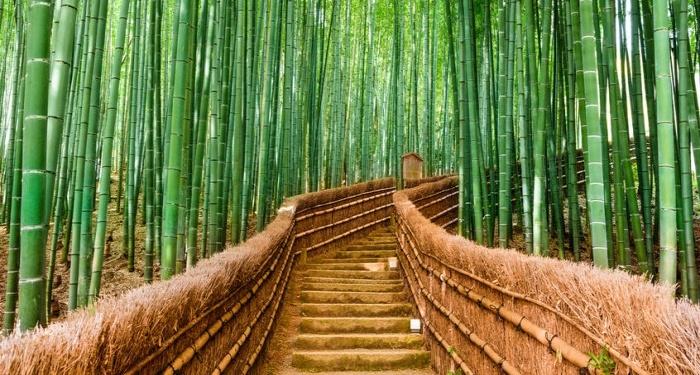 Японские сказки: Вторая молодость