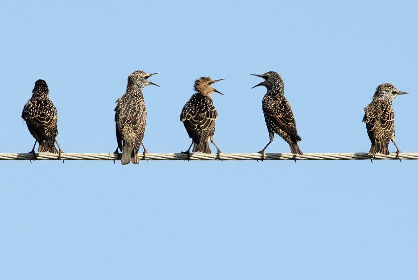В Москву начали возвращаться перелётные птицы