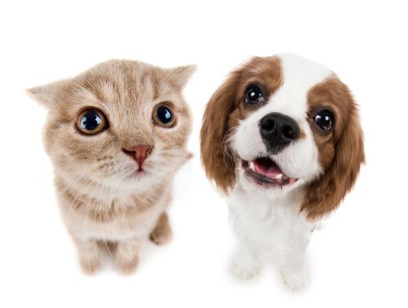 Учёные выяснили, кто приносит хозяевам больше счастья, кошки или собаки