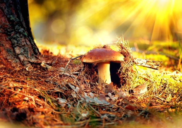 Медики предупредили отдыхающих об опасности лесных грибов