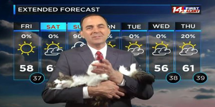 Кошка стала ведущей прогноза погоды на ТВ. Она прославилась благодаря работе на дому своего хозяна