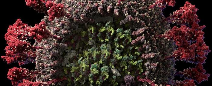 Коронавирус теперь можно разглядеть даже без микроскопа! Он страшно красивый!
