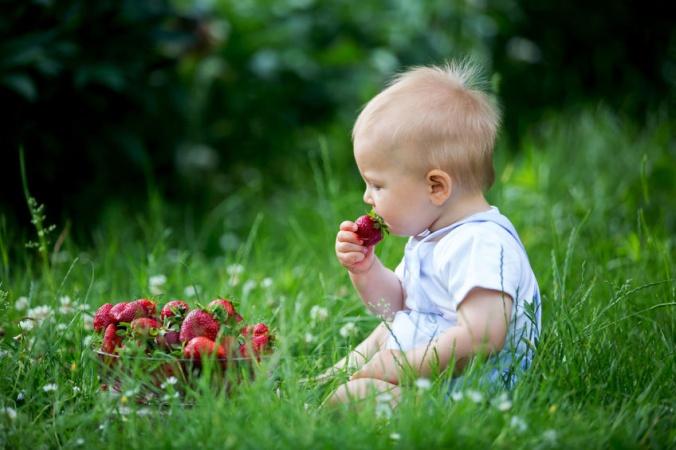 Как выбрать спелую и вкусную клубнику? Раскрываем самый верный способ