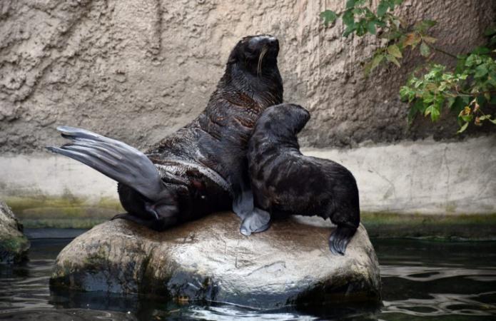 Любопытный и дружелюбный: в московском зоопарке пополнение
