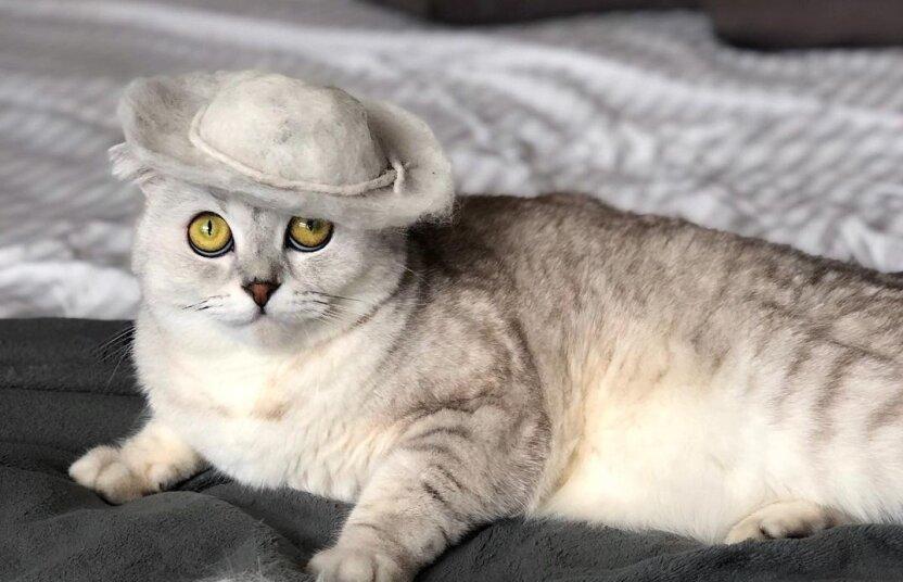 Модные головные уборы из кошачьей шерсти