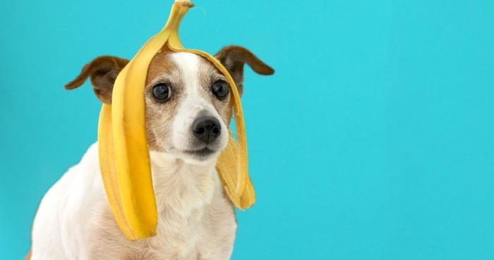 Дом из банановой кожуры