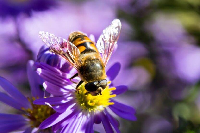 Пчелы научились открывать бутылки с газировкой