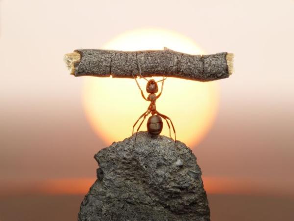 Мастер-класс по тяжелой атлетике от муравья