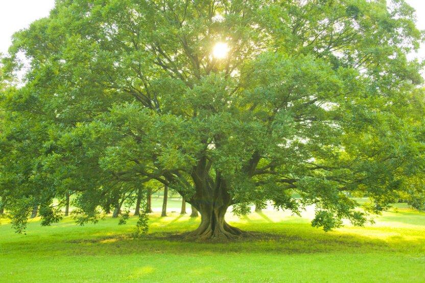 Ученые выяснили, что деревья растут по ночам