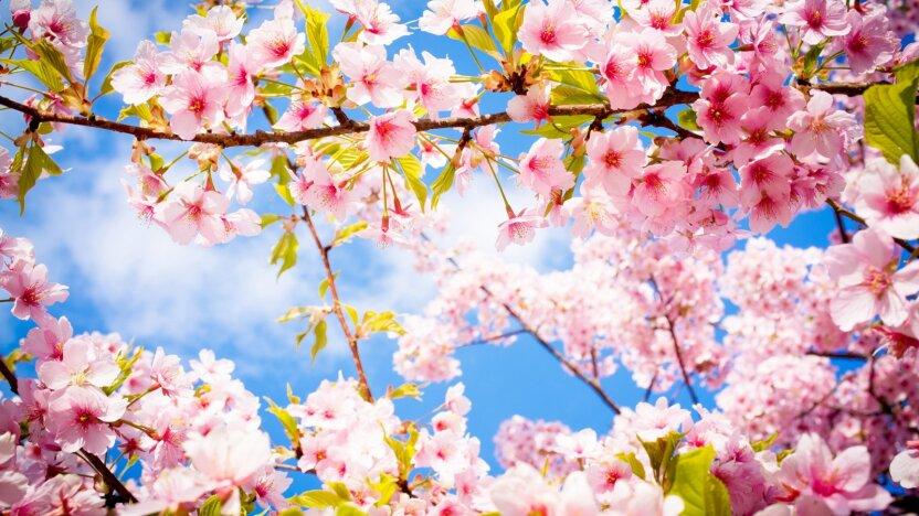 Грядут майские праздники!