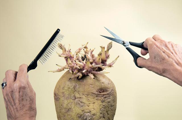 Картошка в роли фотомодели